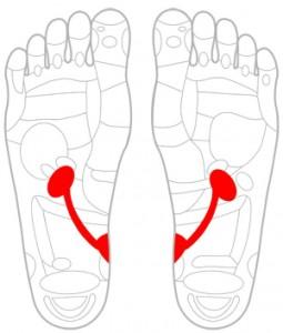 ツボ84腎臓・尿管・膀胱