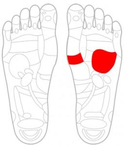 ツボ92心臓(左足のみ)