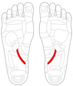 ツボ131尿管
